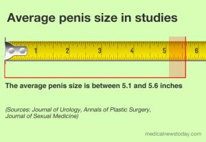 اندازه آلت تناسلی مردانه