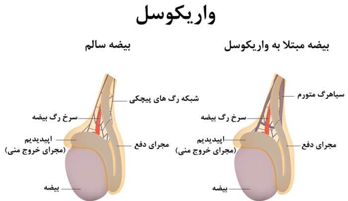 جراح کلیه و مجاری ادراری